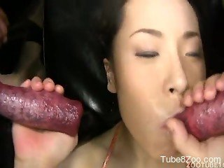 Two dog cocks nicely sucked by Japanese zoophile