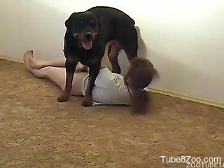 Long-haired owner is playing with his awesome horny dog