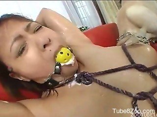 Oriental dog zoophilia XXX with passionate Japanese hookers