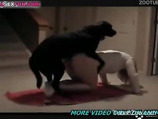 Sweet black dog and horny zoofil are screwing so sweet