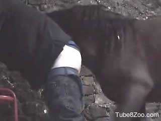 Horse fucks man in the ass while he's screaming