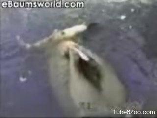 Insane scenes of outdoor aquatic zoo scenes with a horny guy