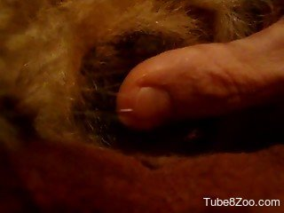 Furry POV scenes of dog sex showing man penetrating the mut