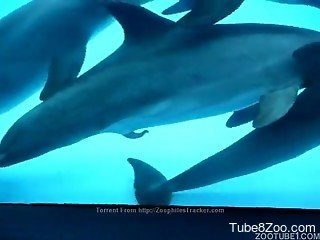 Passionate dolphins are looking extremely sweet especially wit...