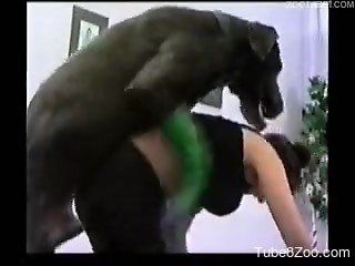 Horny black beast licks her tight snatch in bestiality XXX