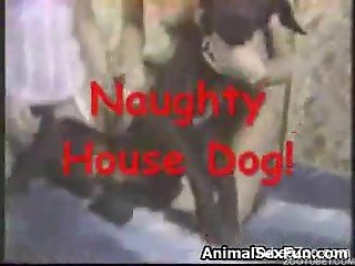 Good trained black dog in amazing amateur bestiality
