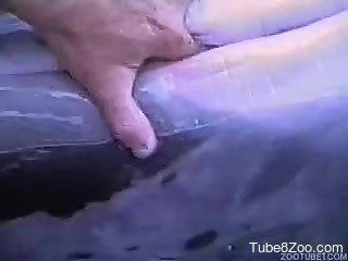 Stimulating tight pussy of a real wild dolphin