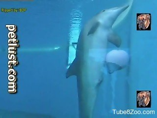 Dirty dolphin showing off its genitalia on camera