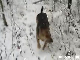 Bearded zoophile blowing his dog in the snow