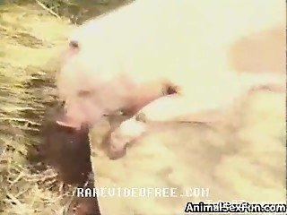 Horny pig fucks a very submissive blonde zoophile