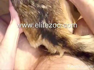 Hairy zoophile dude fucks his submissive dog in POV