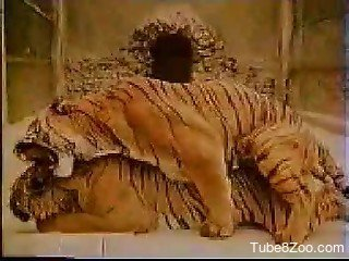 Sensual and passionate real tigers sex scene