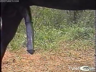 Outdoor fuck-fest featuring two horses and two girls