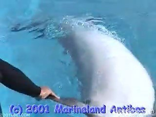Sexy dolphin showing off its naughty bits on camera