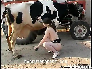 Naughty hottie ends up fisting a cow's big pussy