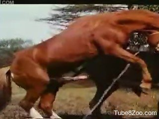 Brown stallion fucks a black mare with his huge cock