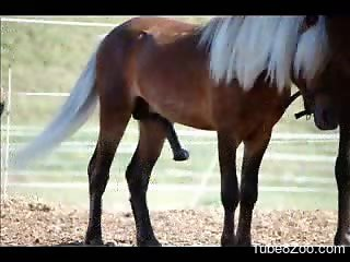 Compilation of horse cock porn videos that you will love