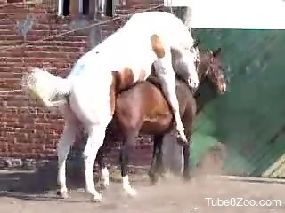 Brown mare getting fucked from behind by a stallion