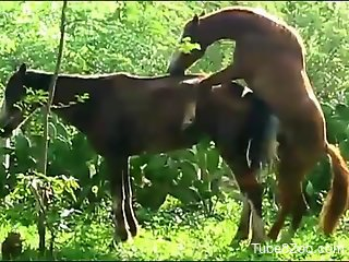 Two animals happily fucking out in the open