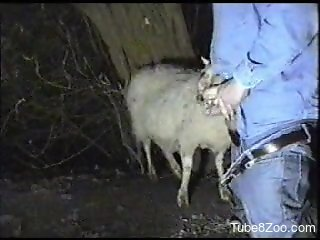 Canadian tuxedo dude fucking a sheep's hot throat