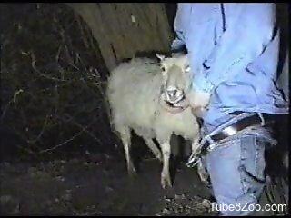 Canadian tuxedo dude fucking a sheep's throat