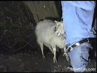 Canadian tuxedo dude fucking a sheep's throat
