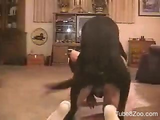 White socks dude getting fucked by a kinky black dog