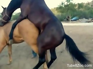 Big-dicked brown stallion fucking a mare's wet pussy