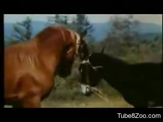 Sexy horses fucking each like crazy out in the open