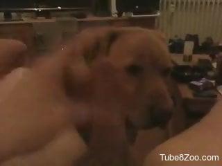 Lucky dude enjoys a POV blowjob from mom's dog