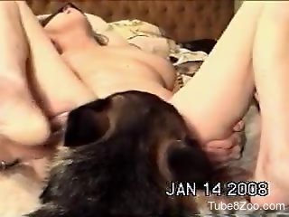 Horny babe gets her pussy licked by a kinky beast