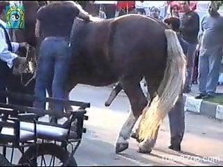 Sexy stallion showcasing its hard dick in public