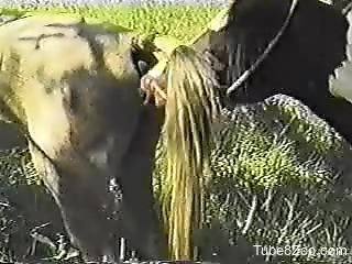 Hardcore fucking scene with a stallion and its mare