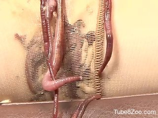 Hot pussy getting infested with worms and more