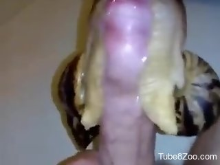 Man places snails on his dick for better stimulation
