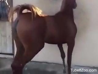 Horse pussy showcased in a voyeur-style porno movie