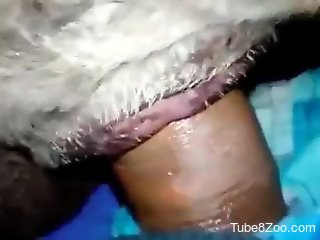 Dude's hard dick drilling a tight animal hole