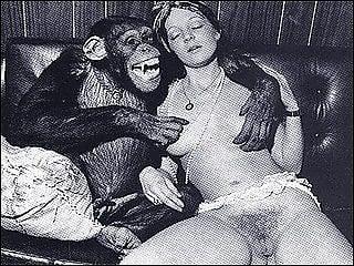 Deutsch animal sex