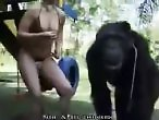 Zoo Sex Tube